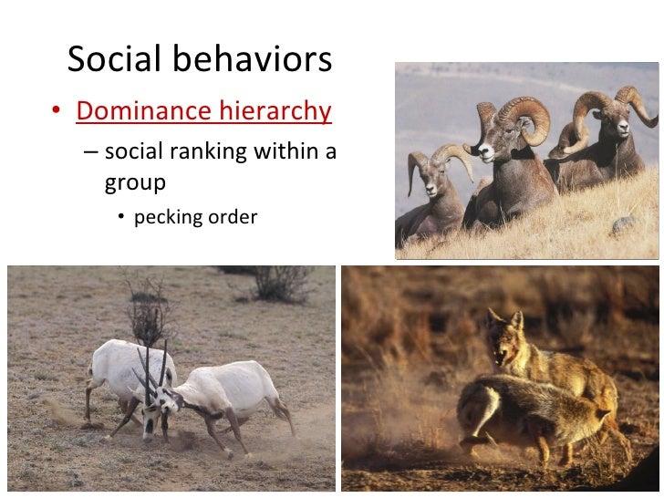 Types of animal behaviour pdf