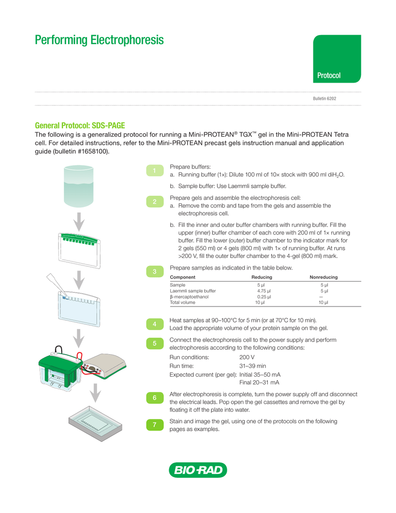 Bio rad sds page manual