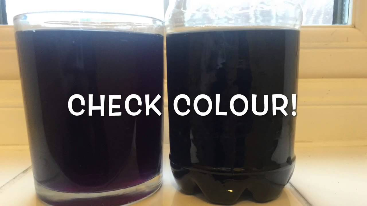 red cabbage gender test instructions