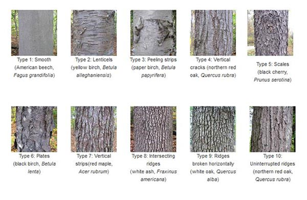 American wood type book pdf