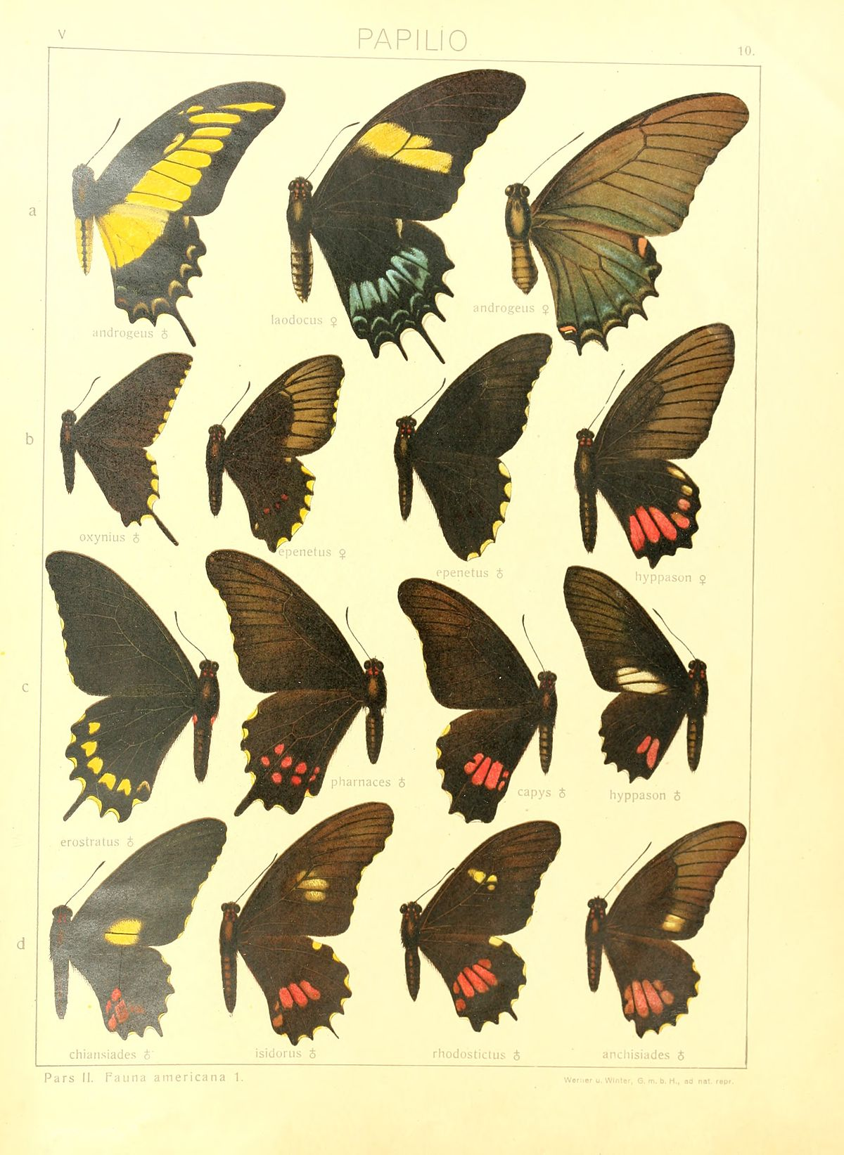 Field guide of cuba-west indies butterflies