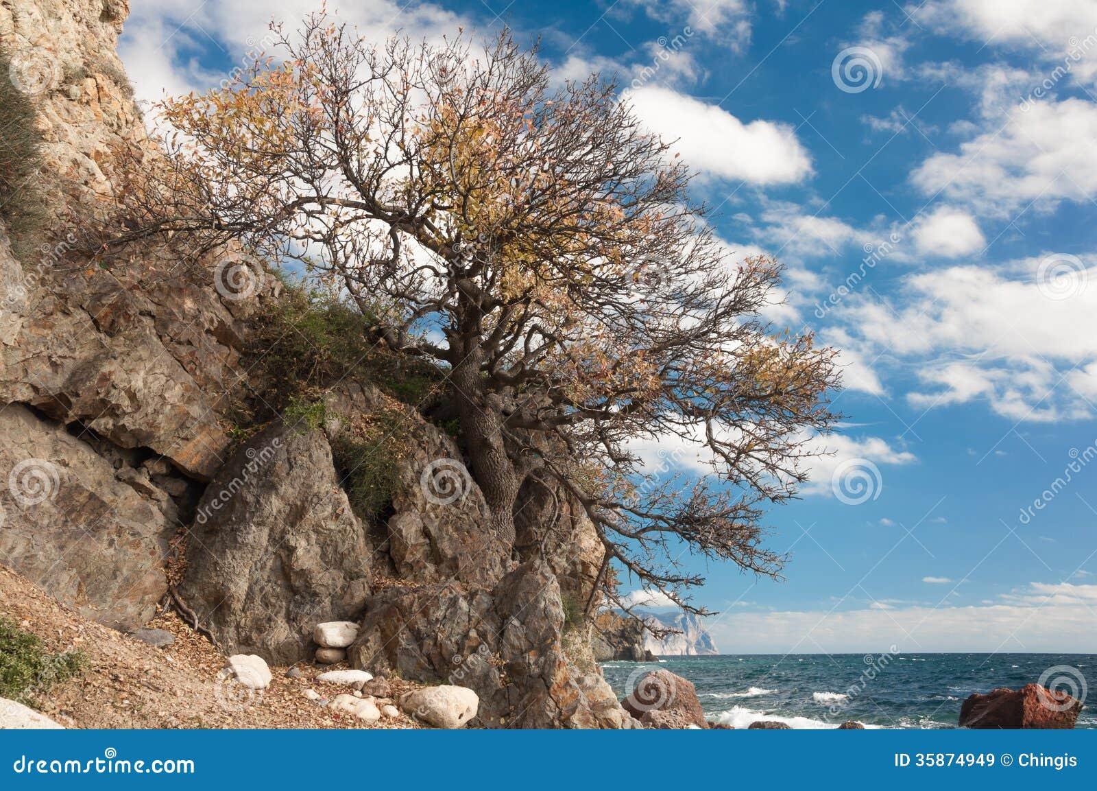 Black sea of trees pdf