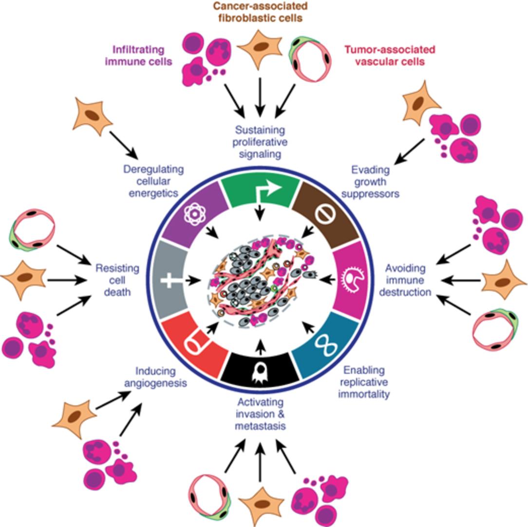 Biology of cancer robert weinberg pdf