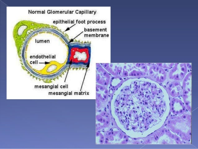 Position for renal biopsy guideline