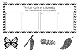 Life cycle of a butterfly worksheet pdf