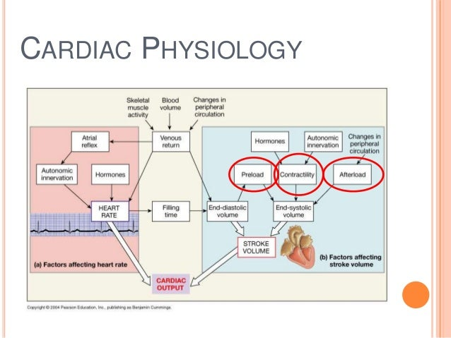 Factors affecting cardiac output pdf