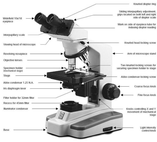 Types of compound microscope pdf
