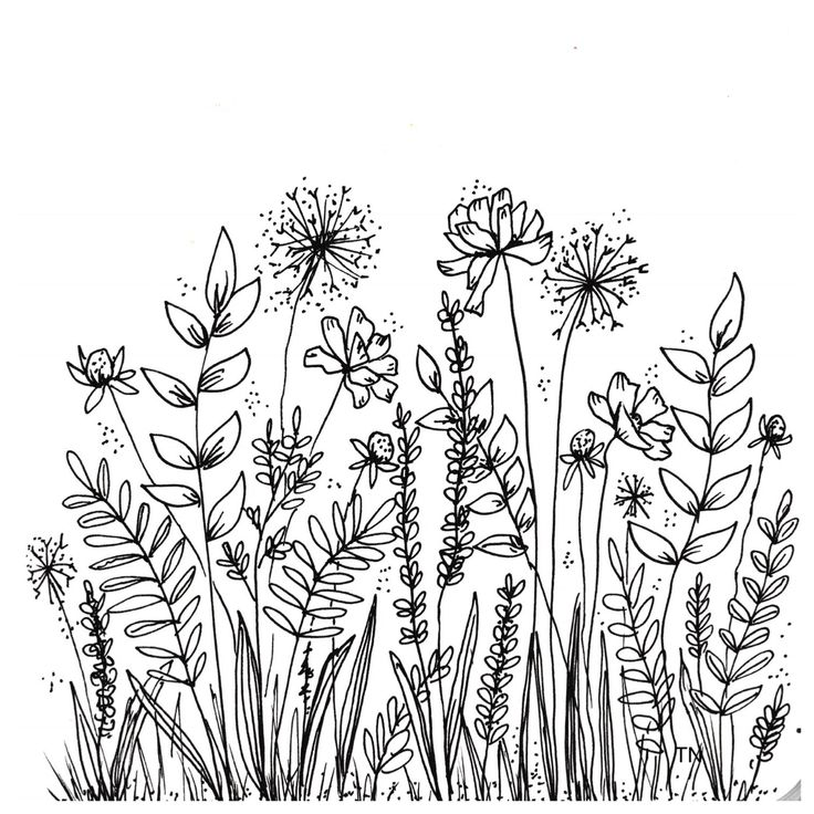 Botanical line drawing peggy dean pdf