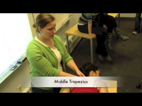lower trapezius manual muscle test