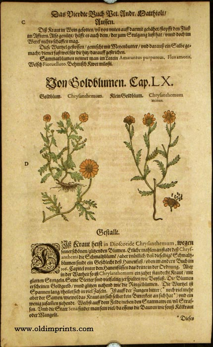Materia medica of western herbs pdf